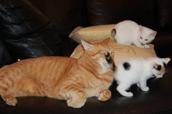 猫たち1.jpg