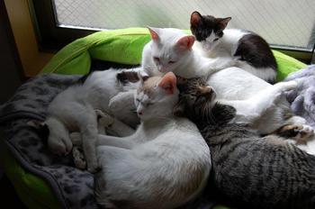 猫は何匹?.jpg