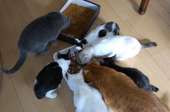 猫は何匹?2.jpg